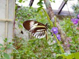 Usa Dairies - Butterfly world - Where Butterflies Take Flight