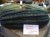 (Nearly) Wordless Wednesday: vt's biggest zucchini