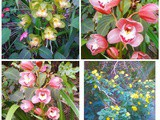 Colours: flowers in the garden and a bright pudding