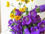 Do you know the name of these Campanula flowers, and Vegan chocolate pudding with strawberries and edible flowers