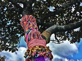 Yarn Bombs in Glen Eden