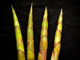 Mountain bamboo shoot