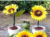 Chocolate Pudding Cup Potted Plants