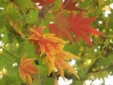 Autumn / Embracing a new season brings new opportunities