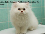 Persian Cats: Complete Pet Breed Information