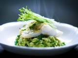 Spring Pea Risotto with Halibut, Spanish Chorizo and Mint