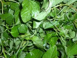 Pictures of Various Types of Spinach or Keerai