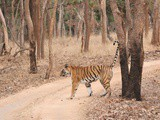 Princess Pleasant Presence (The Princess : Chital Pahadi @ Pench Tiger Reserve
