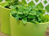 Guest post: 5 top herbs for your culinary garden this summer