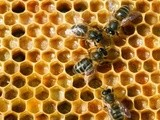 Dublin Beekeepers' Association to host Dublin Honey Show on 8th November