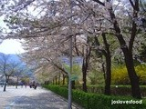 Airline Promotion from Singapore to Korea (Seoul/Busan/Jeju) in Spring 2015