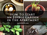 How To Start an Edible Garden in The Apartment