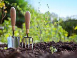 11 Great Gardening Tips