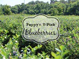 Pappy's u-Pick Blueberries