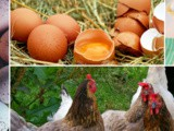 Yellow Egg White? – Answers to Common Egg Questions