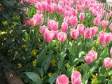 Spring in Istanbul; Tulips, Spectacular Chora Museum, Glorious Turkish Food and More
