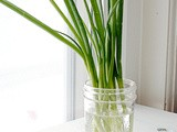 Brain Food 101: How to Store Green Onions