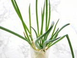 Kitchen Gardener: Grow Green Onions From Cuttings