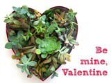 Succulent Heart for Valentine's Day