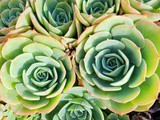 Succulents for Beginners (To Get You Started)