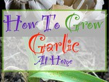 Grow Your Own Garlic At Home