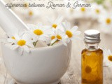 The Guide to Understanding Chamomile Essential Oils