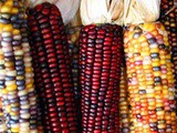Ancient maize followed two paths into the Southwest