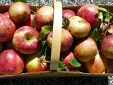 Apple Season Begins as the Garden Dwindles, Fall is Near and Winter Not Far Behind