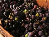 Making Grape Juice for Concord Grape Jelly