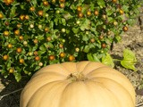 How to Make Fresh Pumpkin Puree