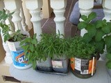 Container Herb Garden with Recycled Plastic Containers