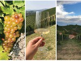 Moscato d'Asti: Versatile Wine from a Noble Grape