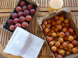 Preserving summer fruits: apricot vs peach